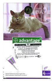 """אמפולות לעורף 4 יח´ לחתול בין 4-8 ק""""ג אדוונטאג´"""