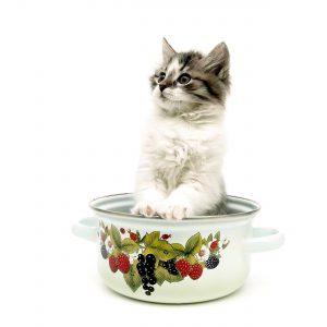 מזון יבש לגורי חתולים