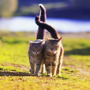 מזון רפואי לחתול