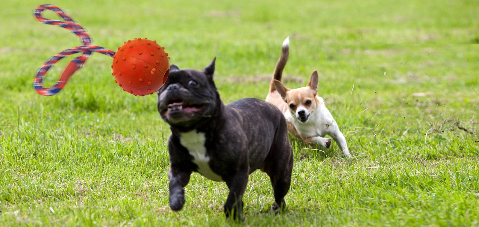התאמת סוג המזון וכמויות האכלה לפי רמת הפעילות של הכלב