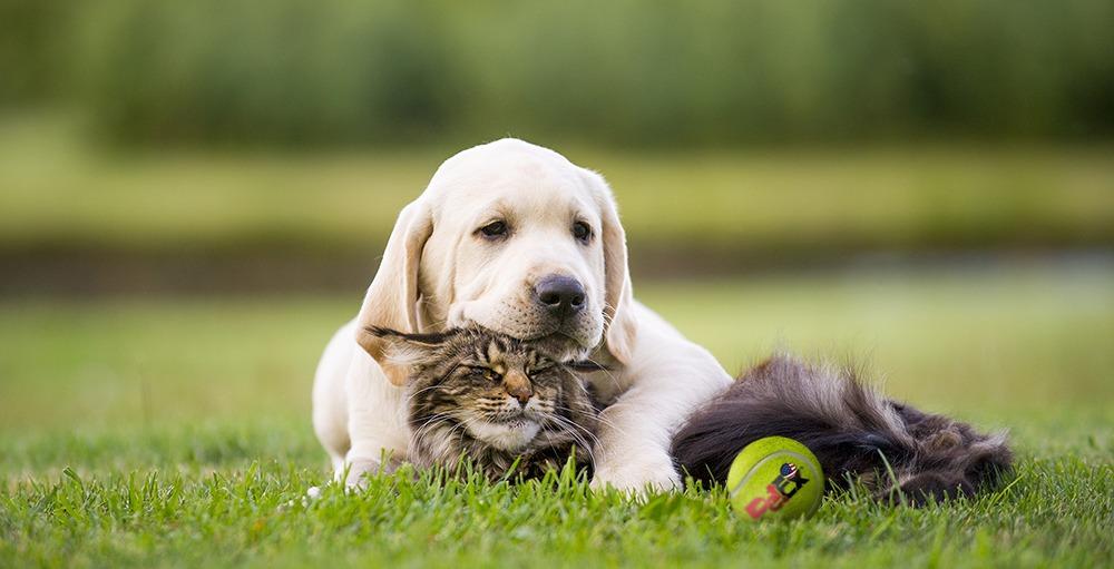תולעת הפארק בכלבים – אבחון וטיפול